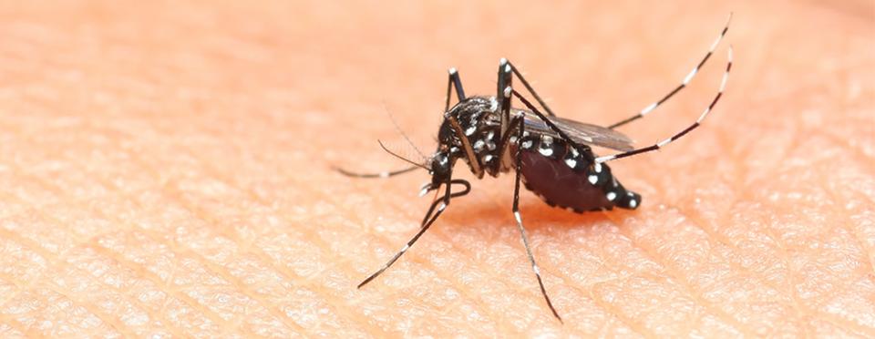 Virus Zika en Guyane et Martinique